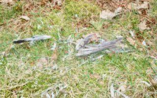 afgebeten vogelveren door vos