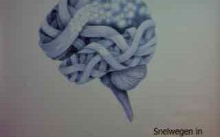 2830   bindingen in de hersenen