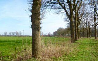 Esbeek landschap